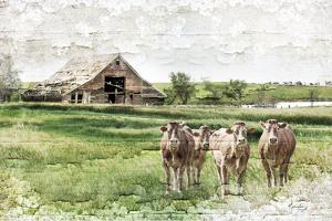 Cows by Jennifer Pugh