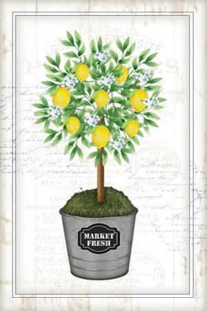 Lemon Topiary by Jennifer Pugh