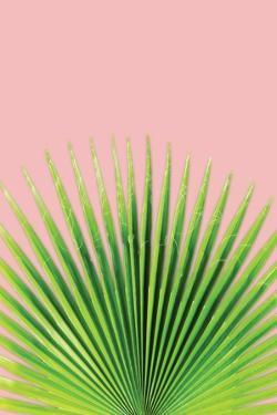 Pink Palm I by Jennifer Pugh