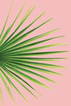 Pink Palm III by Jennifer Pugh