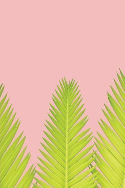 Pink Palm IV by Jennifer Pugh