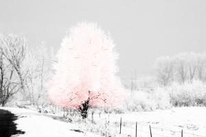 Pink Tree by Jennifer Pugh