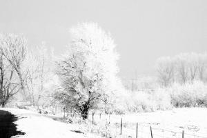 Winter Scene by Jennifer Pugh