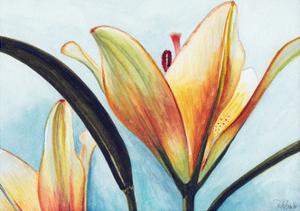 Lilies by Jennifer Redstreake Geary