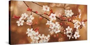 Sakura by Jenny Thomlinson