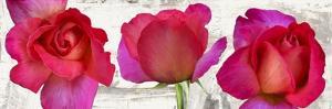 Spring Roses by Jenny Thomlinson