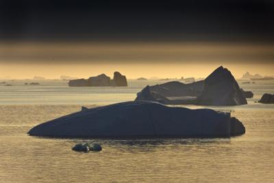 Icebergs, Saqqaq, Greenland, August 2009