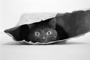 Cat in a Bag by Jeremy Holthuysen