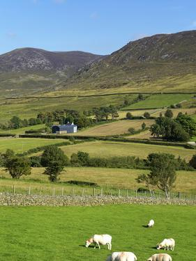 Luke's Mountain, Mourne Mountains, County Down, Ulster, Northern Ireland, United Kingdom, Europe by Jeremy Lightfoot