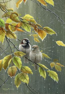 0851 Sparrows In Rain by Jeremy Paul