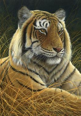 0872 Sumatran Tiger by Jeremy Paul