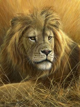 0908 Evening Glow  Lion by Jeremy Paul
