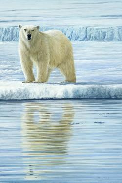 0944 Curious Bear Photo by Jeremy Paul