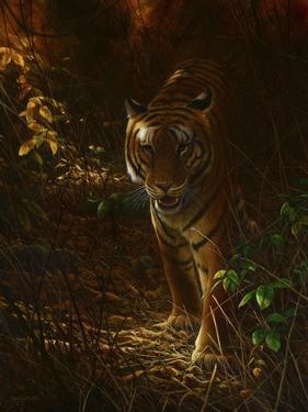 0987 Tiger Odyssey by Jeremy Paul