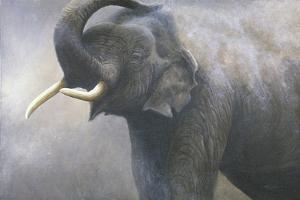 Asian Elephant Dusting by Jeremy Paul