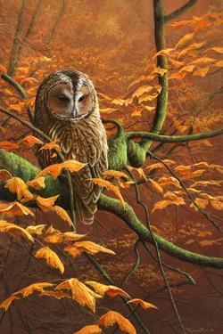 Autumn Tawny Owl by Jeremy Paul