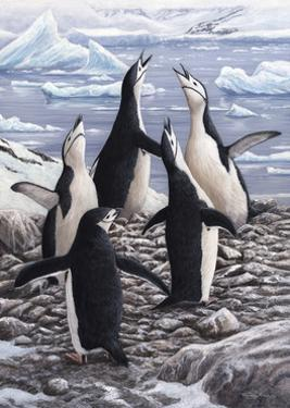 Chorus Chinstrap Penguins by Jeremy Paul