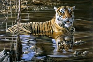 Cooling Off Bengal Tiger by Jeremy Paul