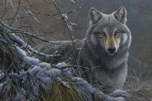 Grey Wolf by Jeremy Paul