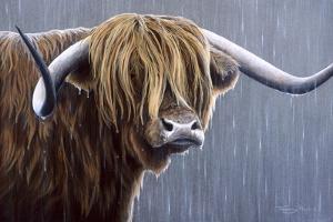 Highland Bull Rainy Day by Jeremy Paul