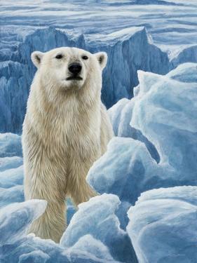 Ice Bear Polar Bear by Jeremy Paul