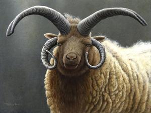 Loaghtan Ram by Jeremy Paul