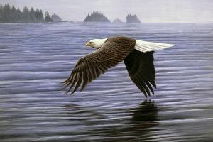 Low Flight Bald Eagle by Jeremy Paul