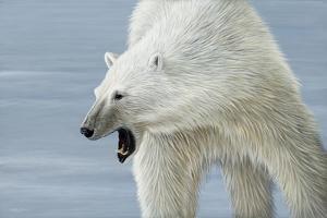 Polar Bear by Jeremy Paul