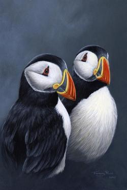Puffins by Jeremy Paul