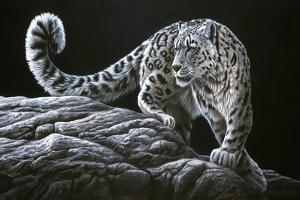 Snow Leopard by Jeremy Paul