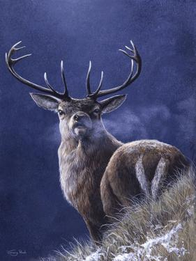 Stag by Jeremy Paul
