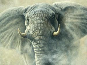 Storm Elephant by Jeremy Paul