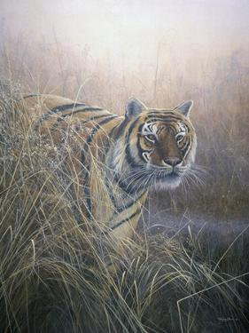 Tiger at Dawn by Jeremy Paul