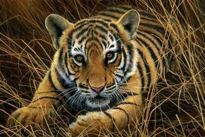 Tiger Cub by Jeremy Paul