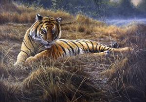 Tiger by Jeremy Paul