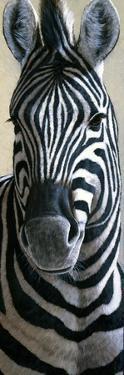 Zebra by Jeremy Paul