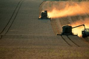 Combine Harvesters And Tractor Working In a Field by Jeremy Walker