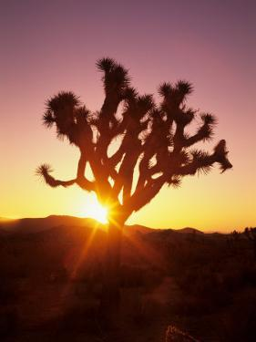 Dawn on the Mojave Desert, California, USA by Jerry Ginsberg