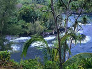 Hilo, Big Island, Hawaii by Jerry Ginsberg