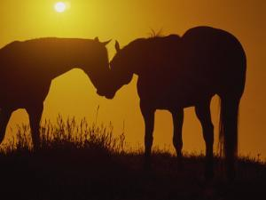 Silhouette of Horses at Sunset by Jerry Koontz