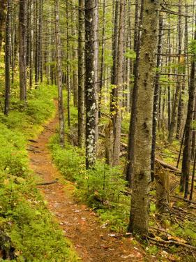 A trail around Ammonoosuc Lake, White Mountain National Forest, New Hampshire, USA by Jerry & Marcy Monkman