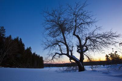 An Apple Tree at Sunset, Notchview Reservation, Windsor, Massachusetts by Jerry & Marcy Monkman