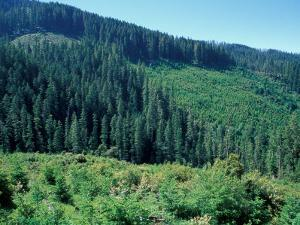 Clearcuts in Spruce-Fir Forest, Siskiyou National Forest, Siskiyou Mountains, Oregon, USA by Jerry & Marcy Monkman