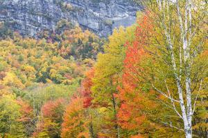 Fall in Grafton Notch State Park, Maine. by Jerry & Marcy Monkman