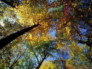 Greeley Ponds Trail, Northern Hardwood Forest, New Hampshire, USA by Jerry & Marcy Monkman
