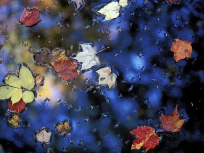 Leaves in a Pond Next to Kilburn Loop Trail, Pisgah State Park, New Hampshire, USA by Jerry & Marcy Monkman