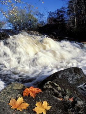 Maple Leaves and Wadleigh Falls on the Lamprey River, New Hampshire, USA by Jerry & Marcy Monkman