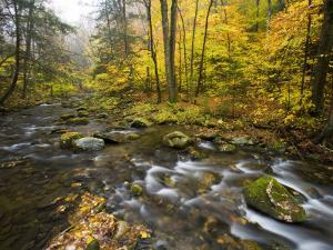 Sanderson Brook, Chester-Blanford State Forest, Chester, Massachusetts, USA by Jerry & Marcy Monkman
