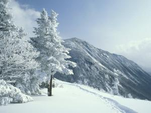 Snow Covered Trees and Snowshoe Tracks, White Mountain National Forest, New Hampshire, USA by Jerry & Marcy Monkman