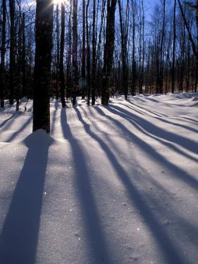 Snow in the Northern Hardwood Forest, Maine, USA by Jerry & Marcy Monkman